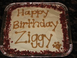 Happy Birthday cake for dog