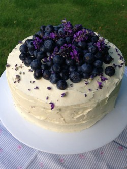Tasty blueberry cake