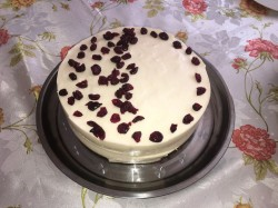 Cheese Cake with Dried Cranberries (2017 April)